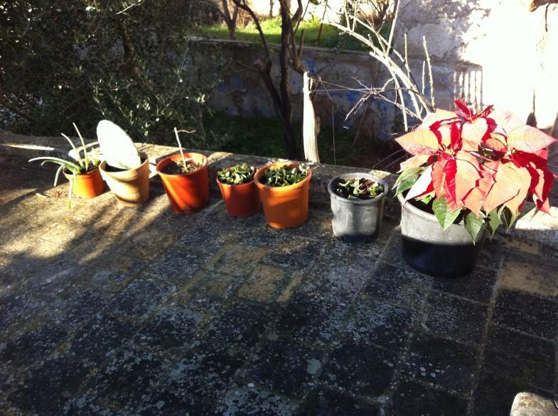 Blommor på mellanvåningens terrass